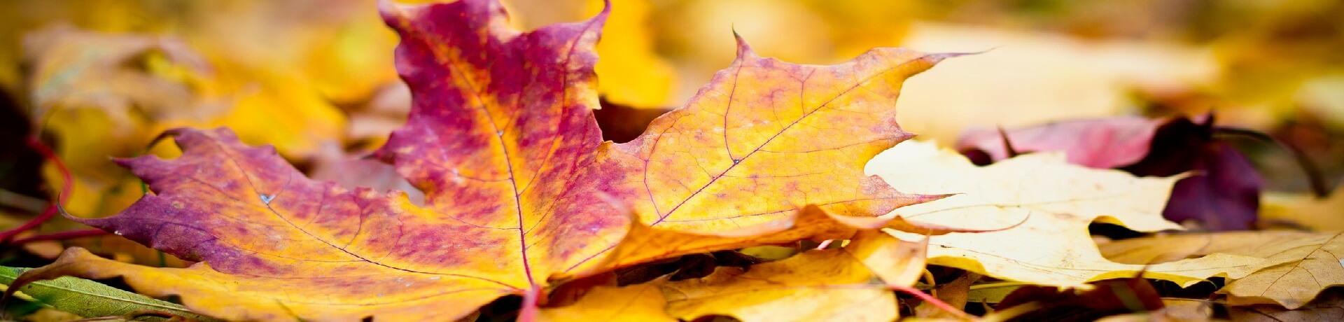 Velká nabídka podzimní dekorace.