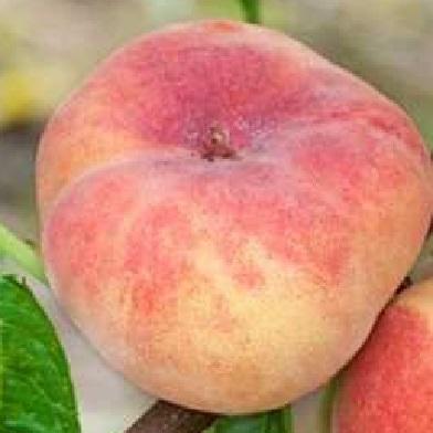 Broskvoně, nektarinky - Sendwich Gelb