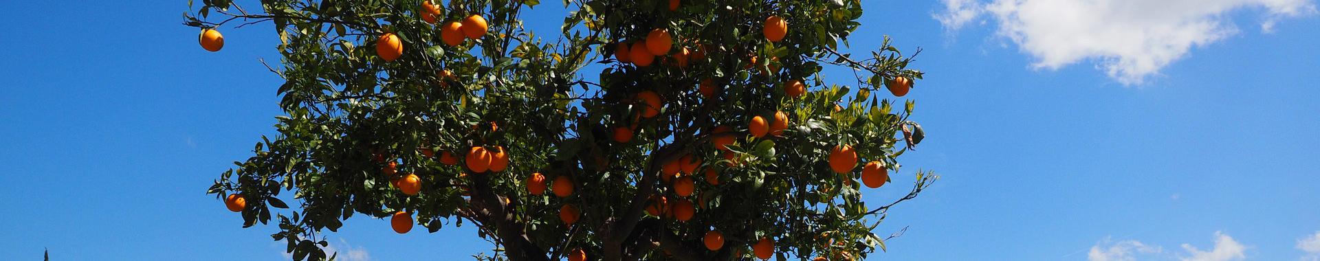Rostliny ovocné