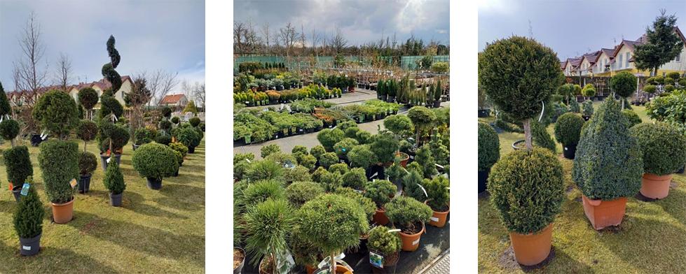 Jehličnaté rostliny