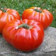 Rajčata - Rajče masité - Buffalosteak