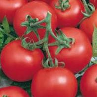 Rajčata - Rajče tyčkové - Niky Zel